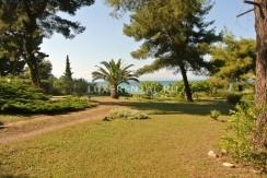Huge garden area